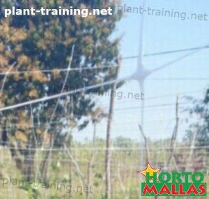 trellis net installed on cropfield