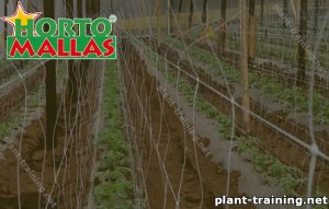 Training mesh installed in crops