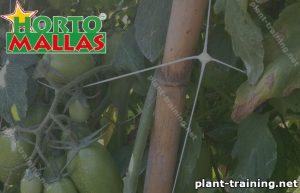 Plant training net